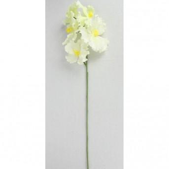 0047 Орхидея