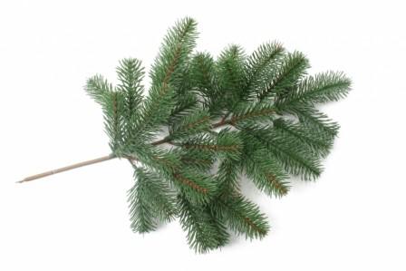 Е 28 ветка елки 3025
