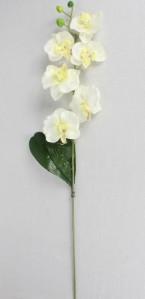 Орхидея ZMC2009
