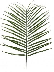 Букет пальма гигант 42см В2182