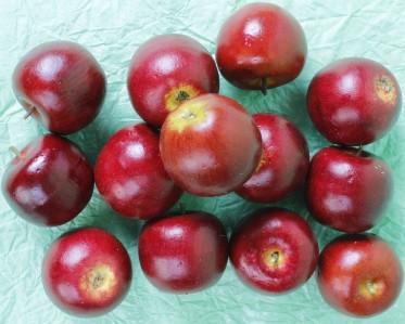 Яблоко LTO1550-10
