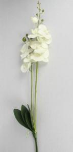 Орхидея TJ2012-014