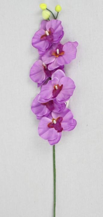 Орхидея KWLA042