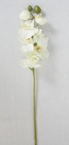 Орхидея SAN340