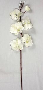 Орхидея н.г.1793