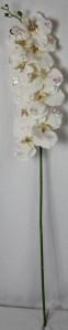 Орхидея KWY50