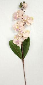 Орхидея 364