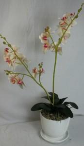 Орхидея в горшке ZLA015