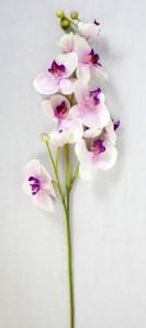 Орхидея SUN438