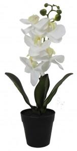 Орхидея в горшке GH 0327