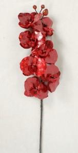 Орхидея н.г.AJ45878