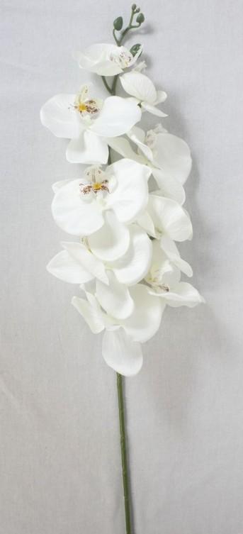 Орхидея LYB012