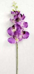 Орхидея KLM1001