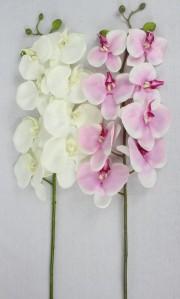 Орхидея 92CANY0300692CANY03001