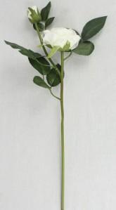 Роза спрей ZYH153