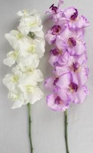 Орхидея AJ45997