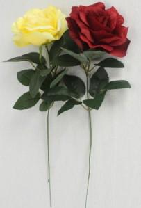 Роза ZLIU081