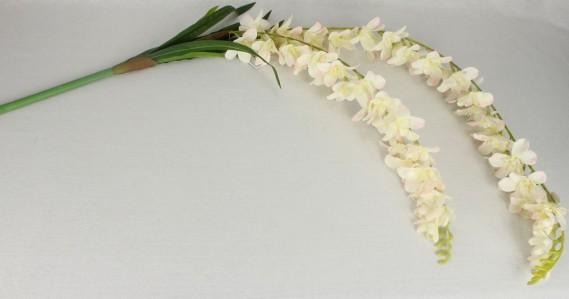 Орхидея свисющая KWL892CAN08023