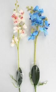 Орхидея SAN332
