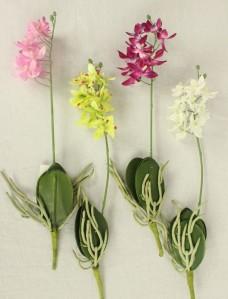 Орхидея мини с корнем 81CAN15422