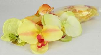 Гол орхид 24